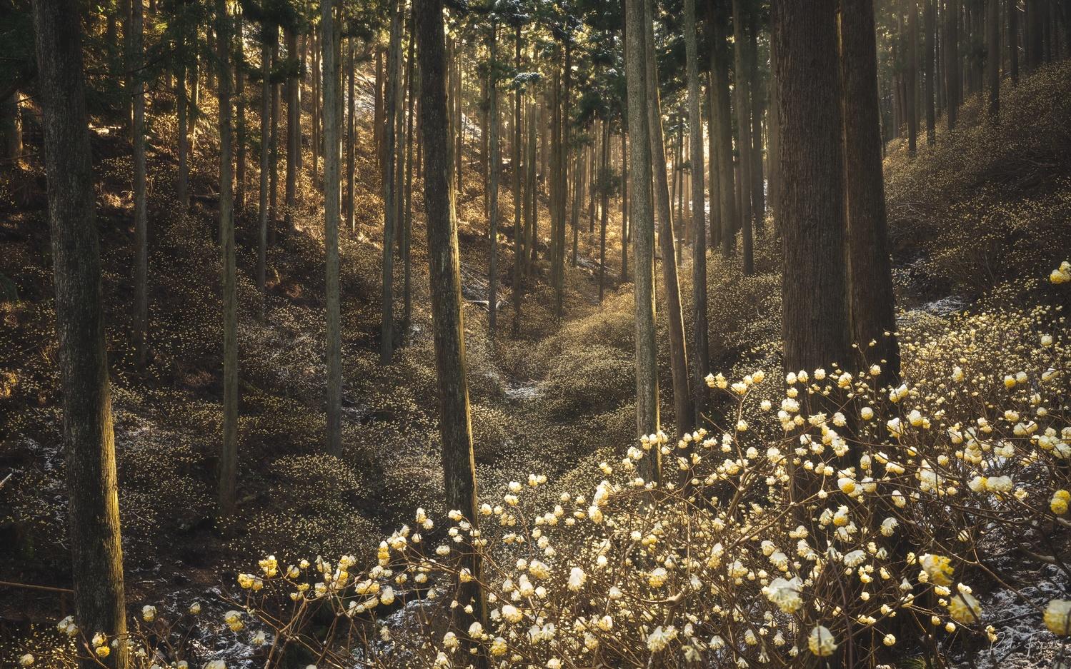 fairy by Ryota Fukuda