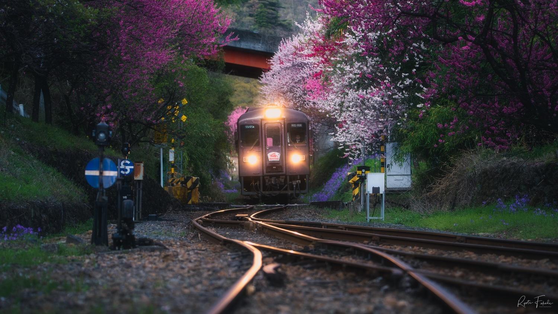 Spring by Ryota Fukuda