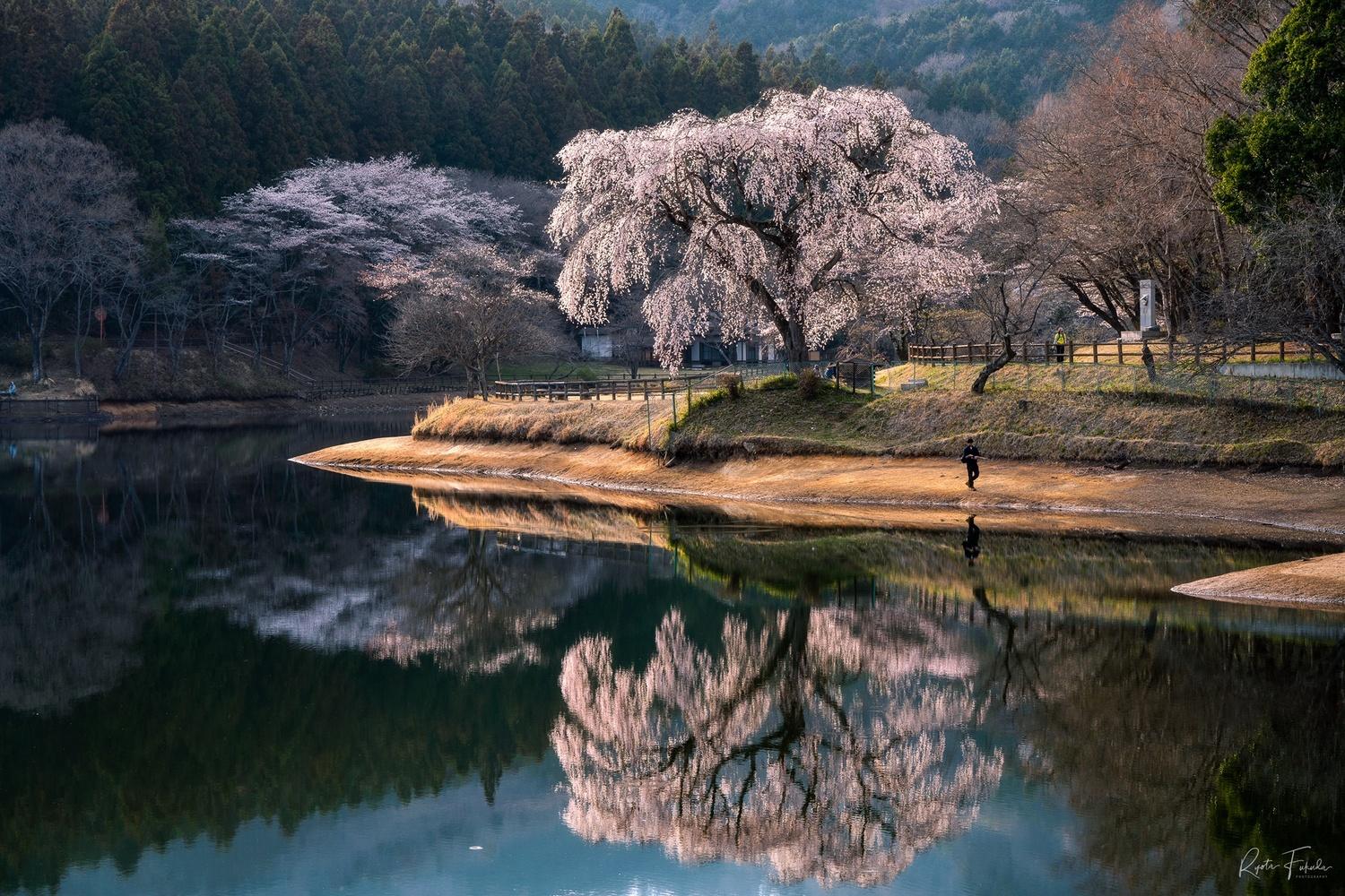 In the mirror by Ryota Fukuda