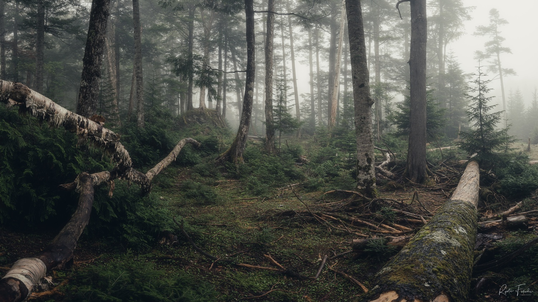 mist forest by Ryota Fukuda