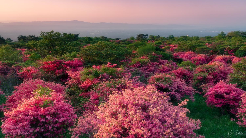 Flower by Ryota Fukuda