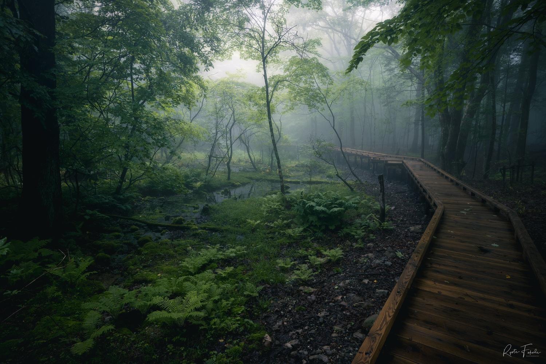 Fog day by Ryota Fukuda
