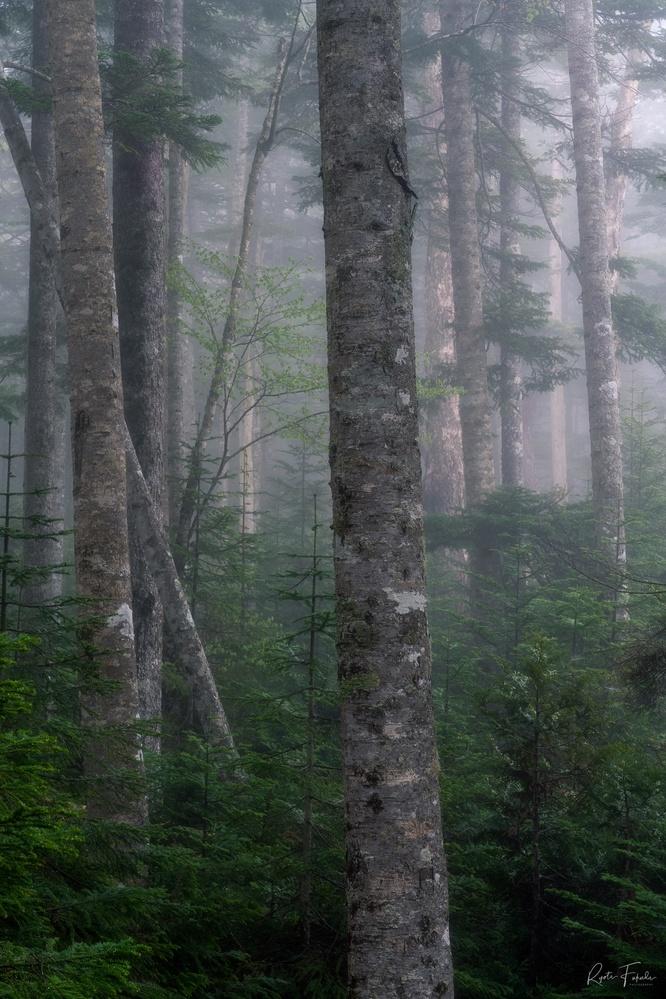 Foggy tree by Ryota Fukuda
