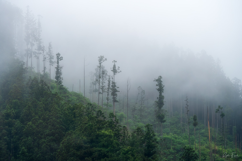 deforestation by Ryota Fukuda