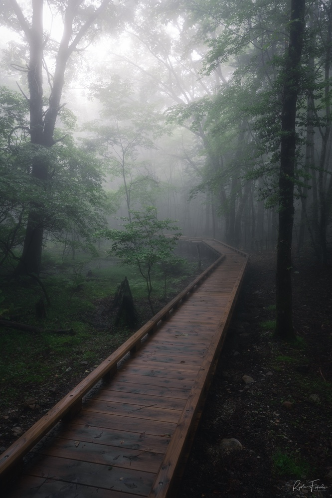 Foggy woods by Ryota Fukuda
