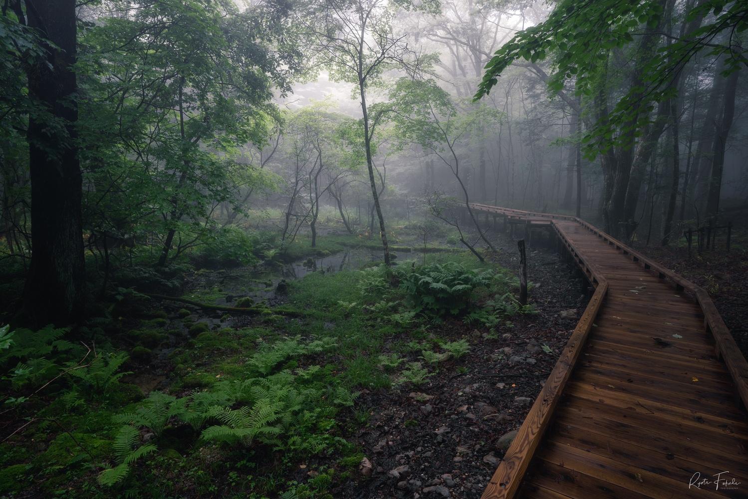 Nature road by Ryota Fukuda