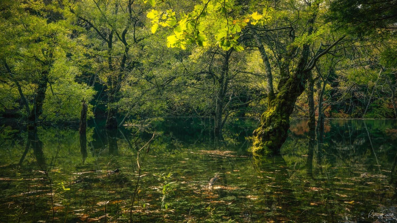 Nature by Ryota Fukuda