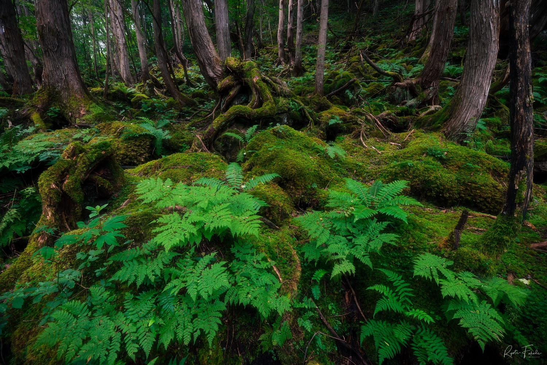 Ghibli Forest by Ryota Fukuda