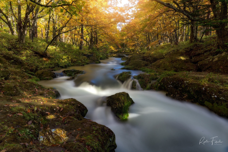 Autumn by Ryota Fukuda