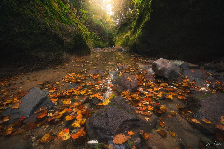 Autumn canyon by Ryota Fukuda