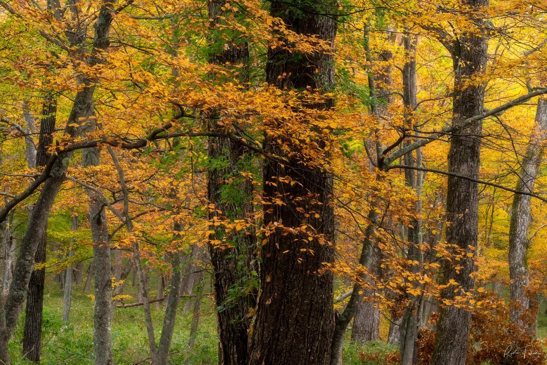 Autumn colour by Ryota Fukuda