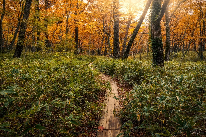 Autumn road by Ryota Fukuda