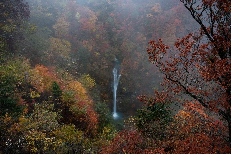 Fall by Ryota Fukuda