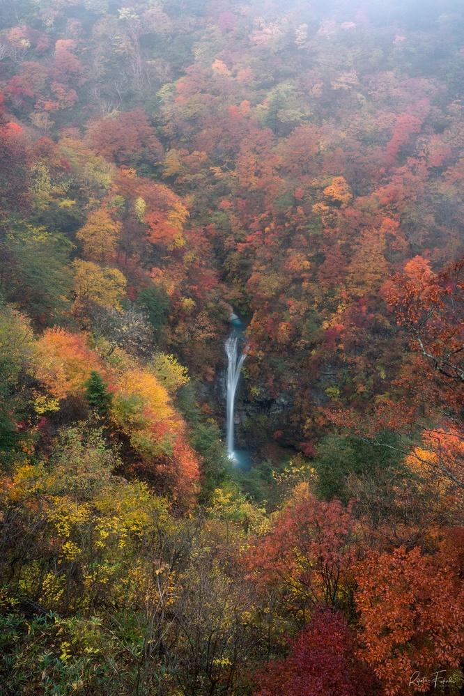 Autumn colors by Ryota Fukuda