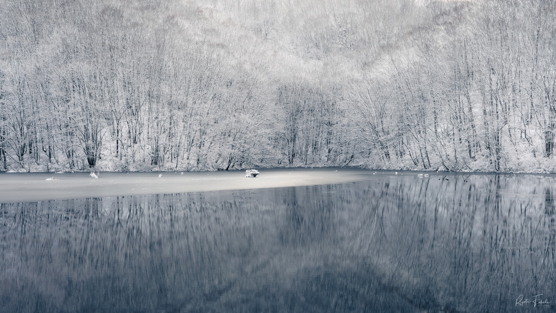 Snow woods by Ryota Fukuda