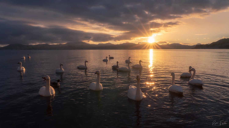 Swan by Ryota Fukuda