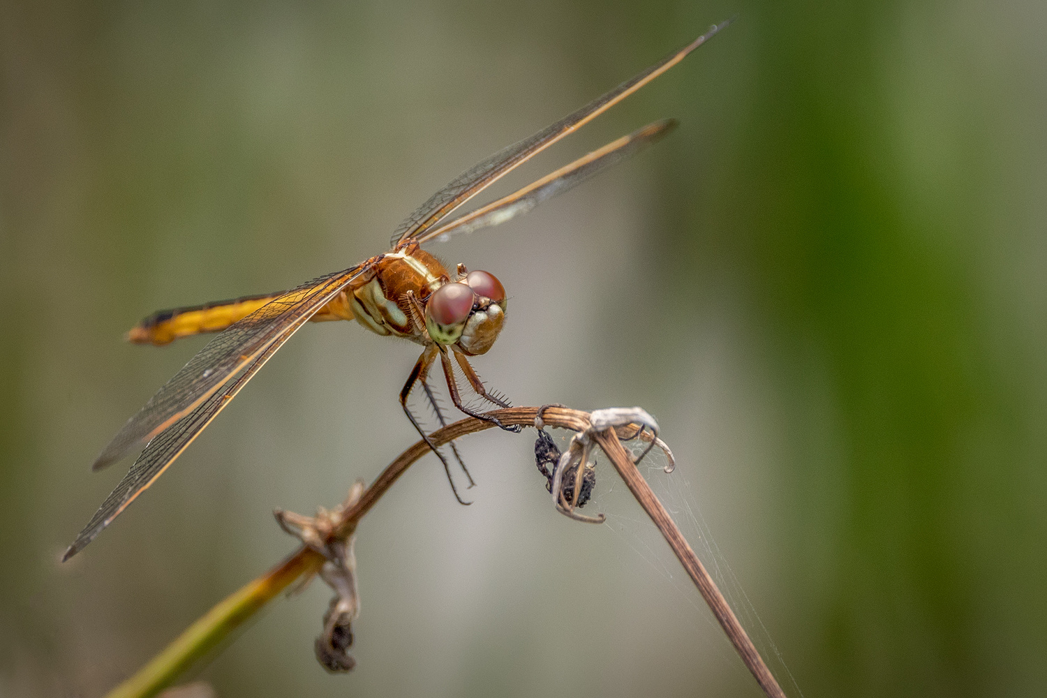 Dragonfly by David Boardman