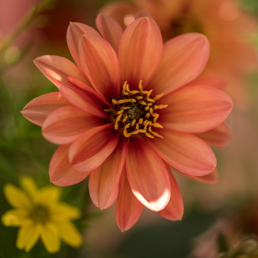 Garden Flowers by David Boardman