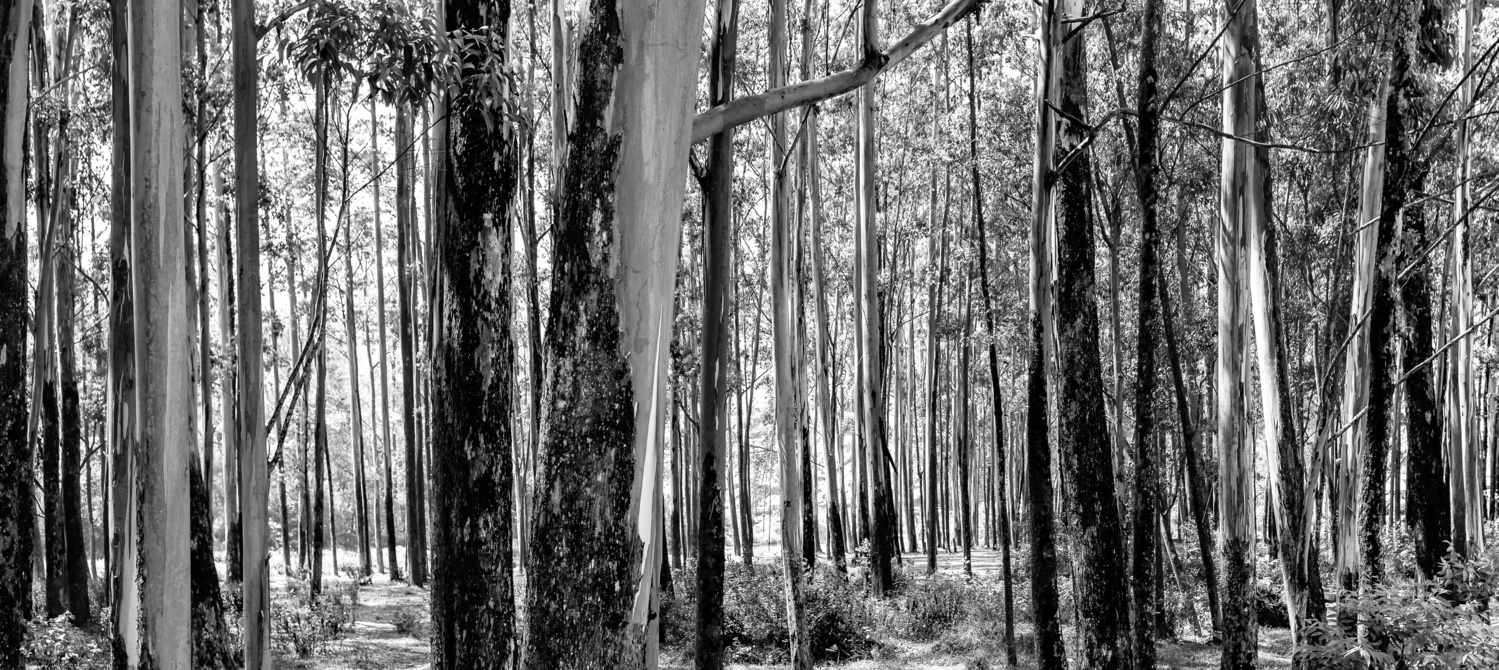 Trees by Arvind Vallabh