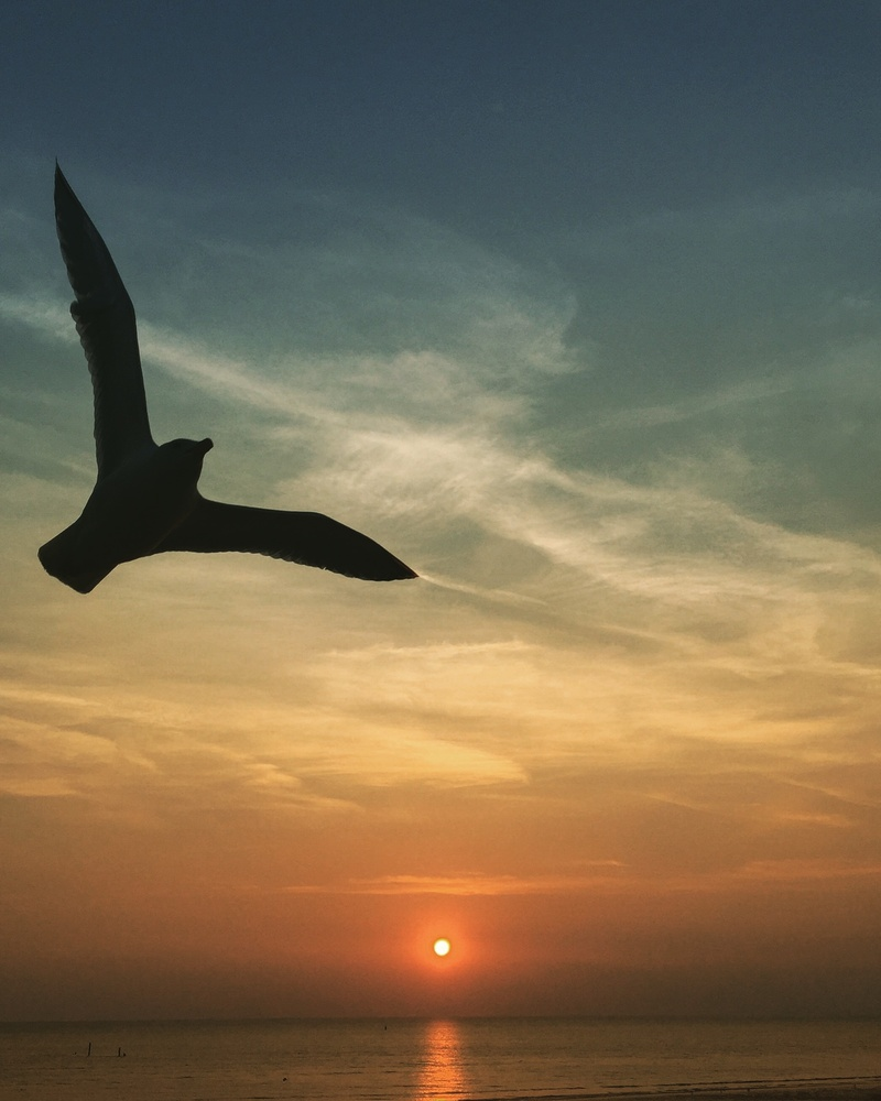 A bird at sunset. by Sue DeNym