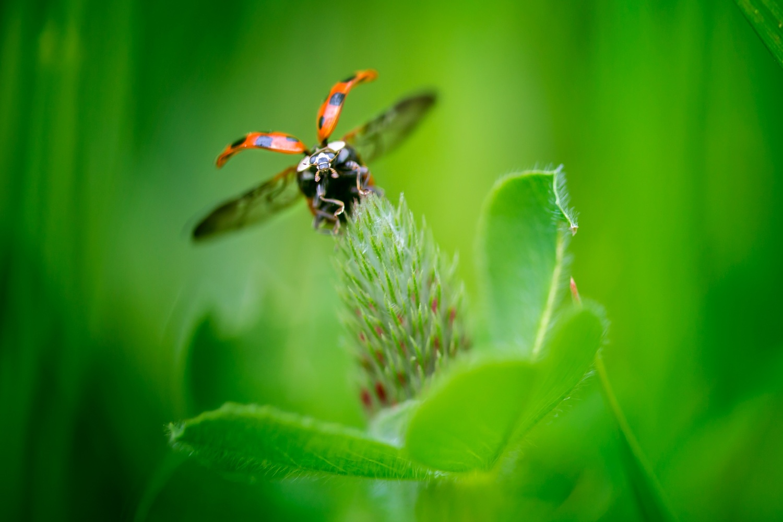 Ladybug Takeoff! by Peter Barta