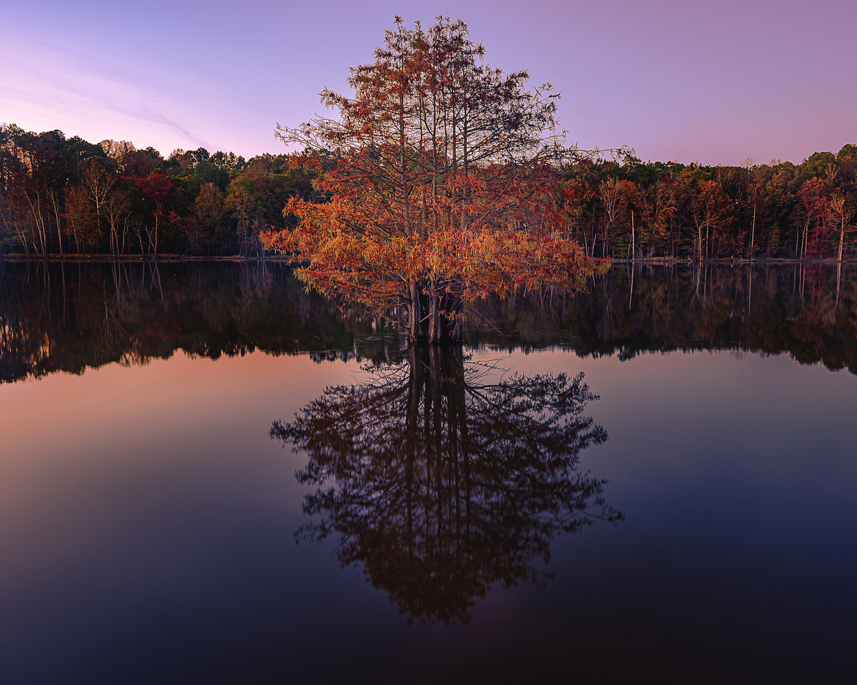 Tree Reflection by Kyle Foreman