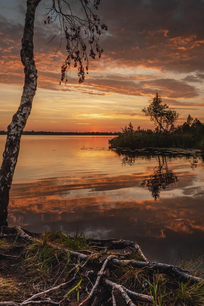 Bog at sunset by Ragnar Adamson