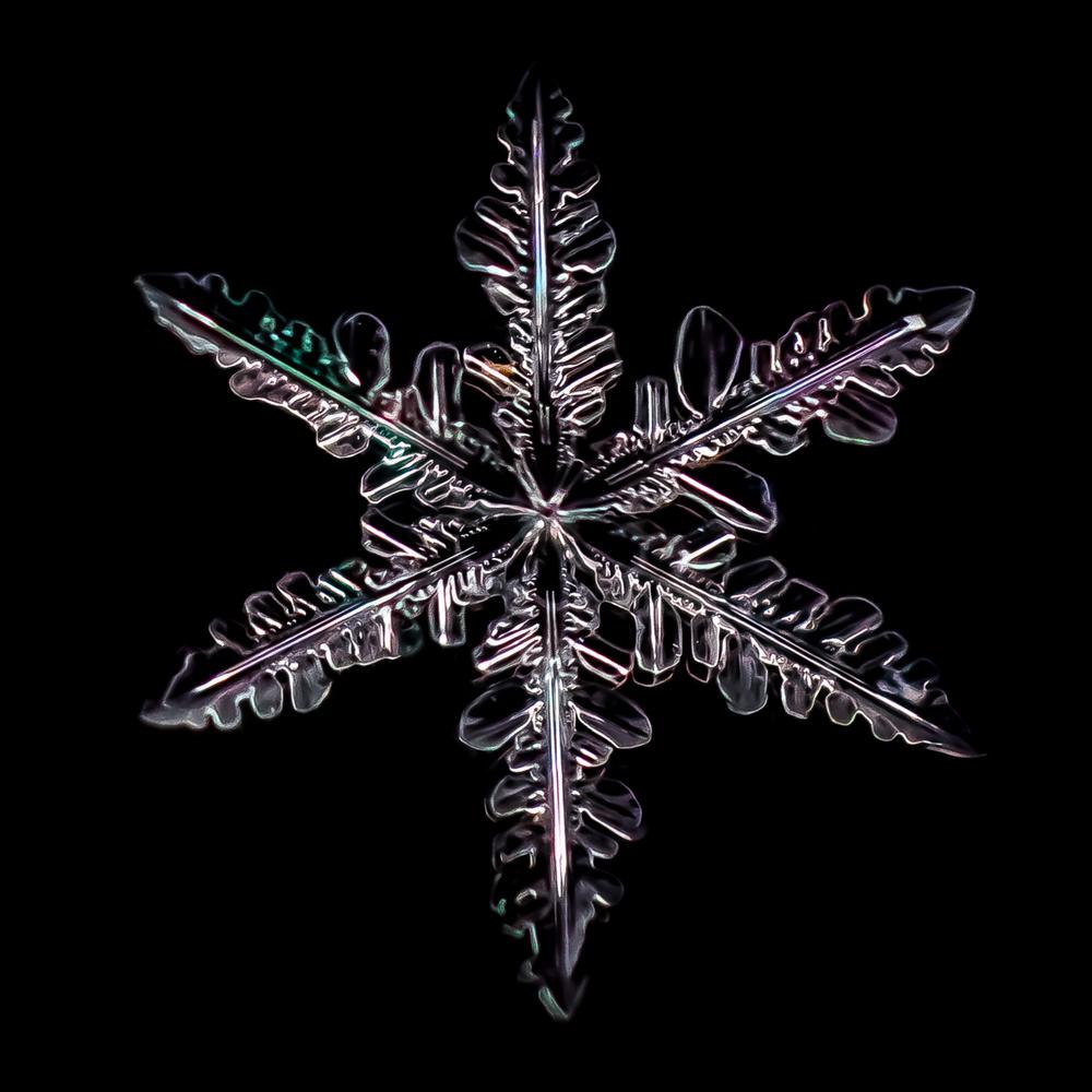 Snowflake by Troy Straub