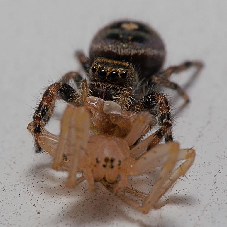 Spider Drink Spider World by Troy Straub