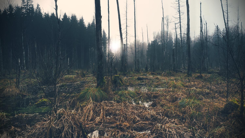 Into the wilderness  by Paweł Twardowski