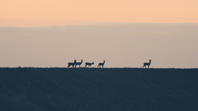 Watch the horizon  by Paweł Twardowski