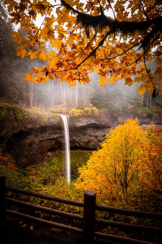 Fall by Wade Penner