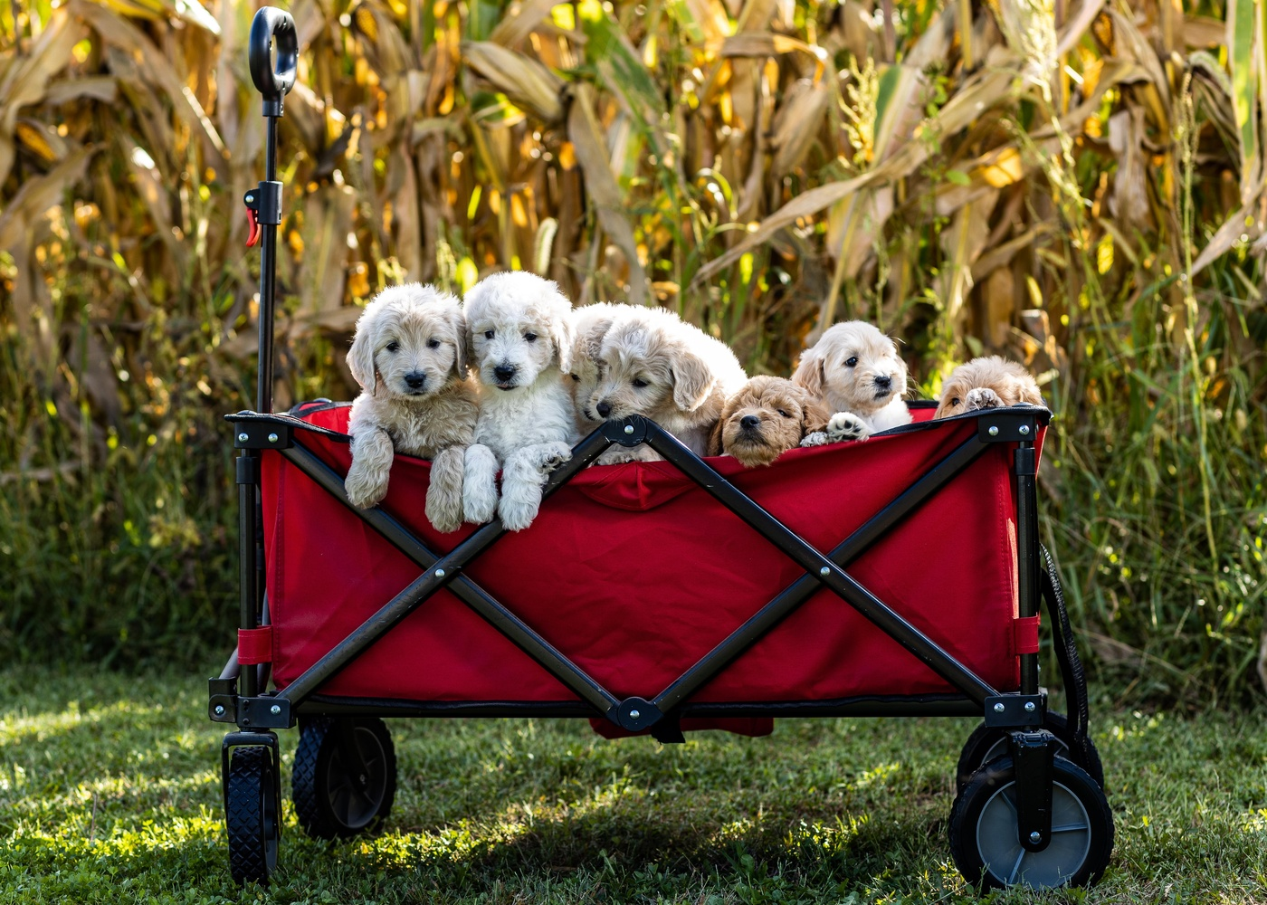 Basket of Pups by Chris Manning