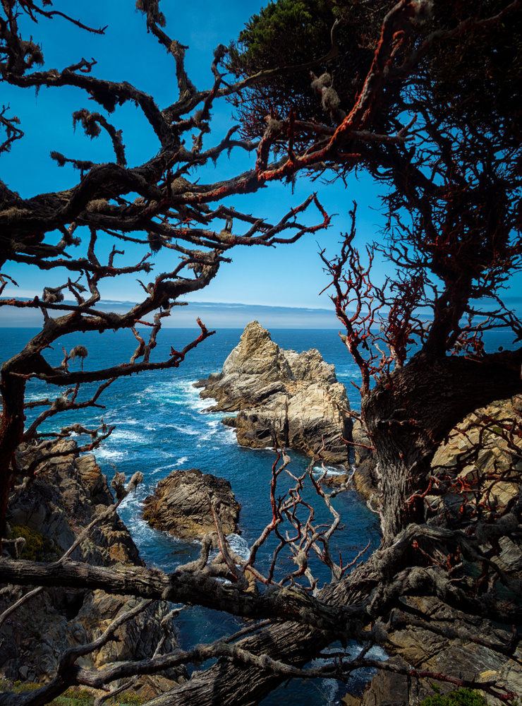 Point Lobos State Reserve, California by Romain Curutchet