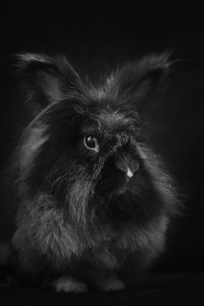 bunny by Alexandre Marques