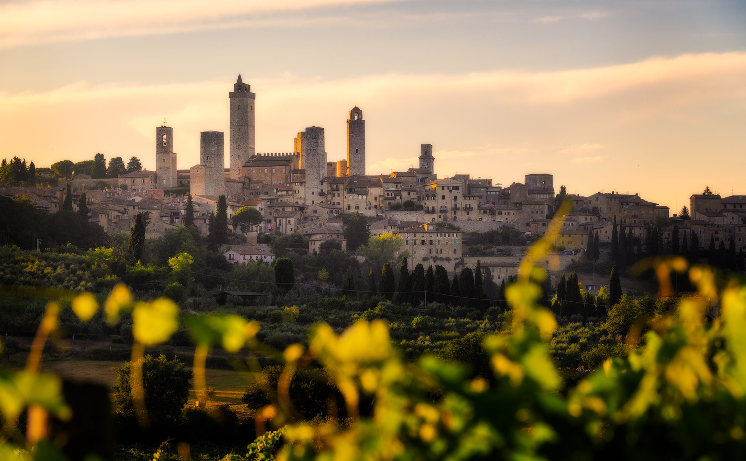 San Gimignano and The Vineyards | Italy by Nico Trinkhaus