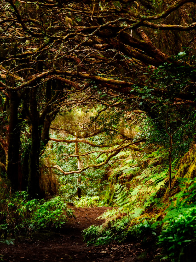 Laurel Forest on Anaga Mountains | Tenerife, Spain by Nico Trinkhaus