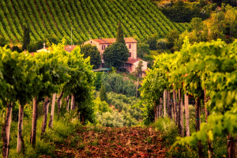 Vineyard | Tuscany, Italy by Nico Trinkhaus