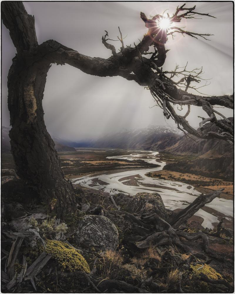 El arbol y el tiempo by Jorge Andrés Miraglia