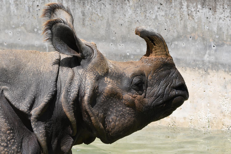 Portrait Rhino by Tobias Broch