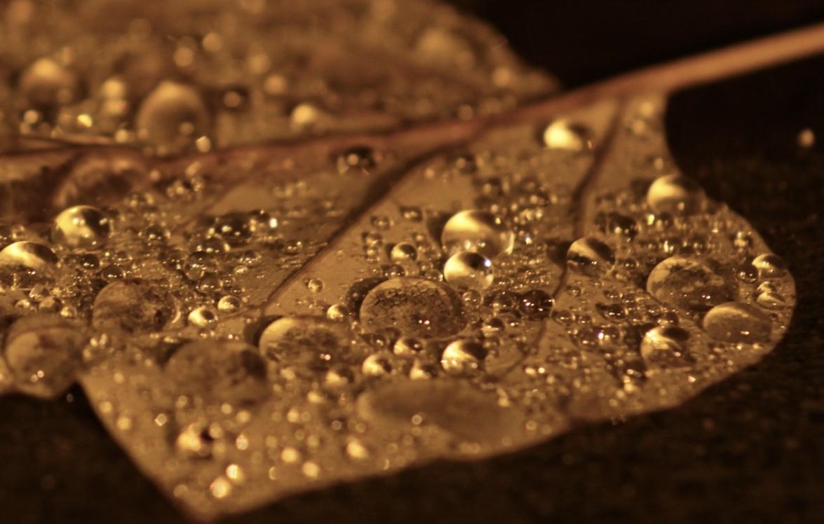 Rain on leaf by Logan Lee