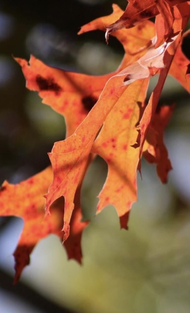 Leaves #2 by Logan Lee