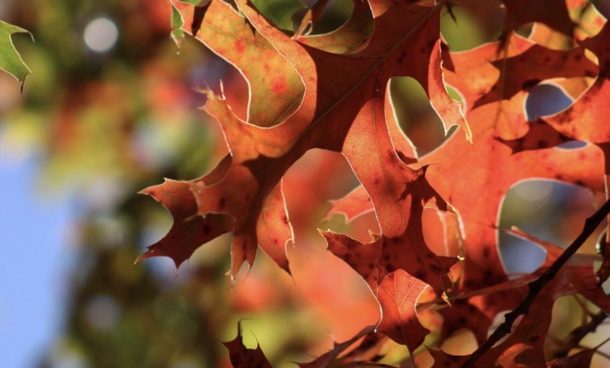 Leaves by Logan Lee