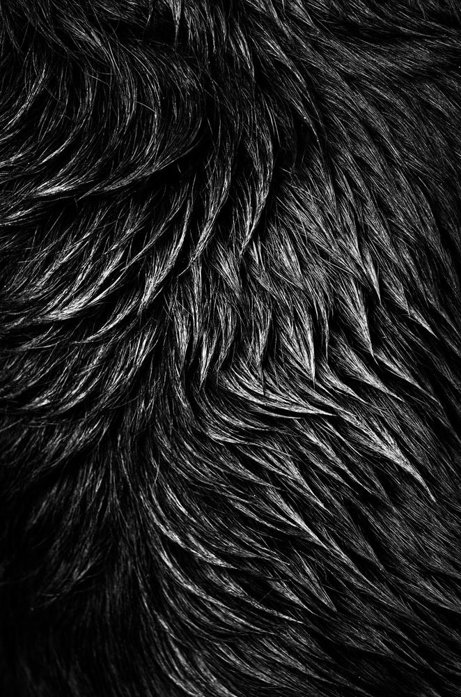 Fur by Rodrigo Junqueira