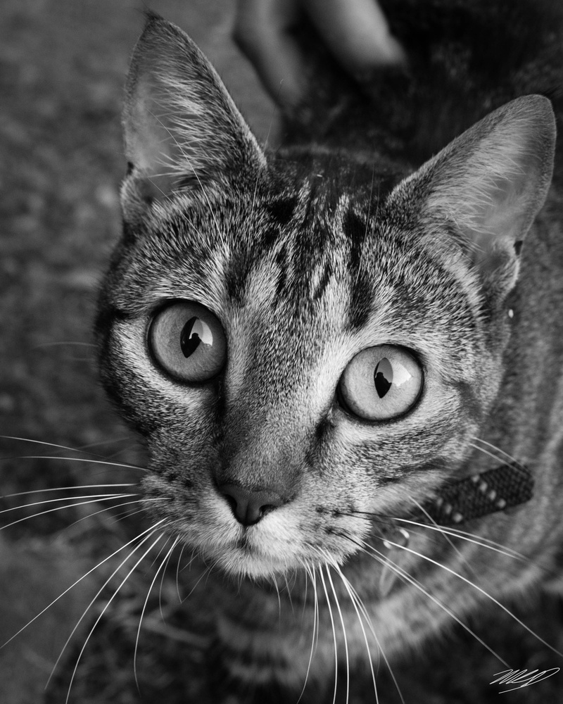 Young Cat by Michel Dickenson