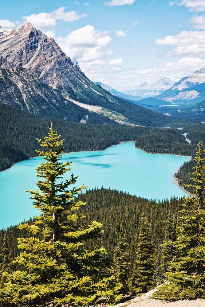 Peyto Lake, Alberta by Lee Hanyo