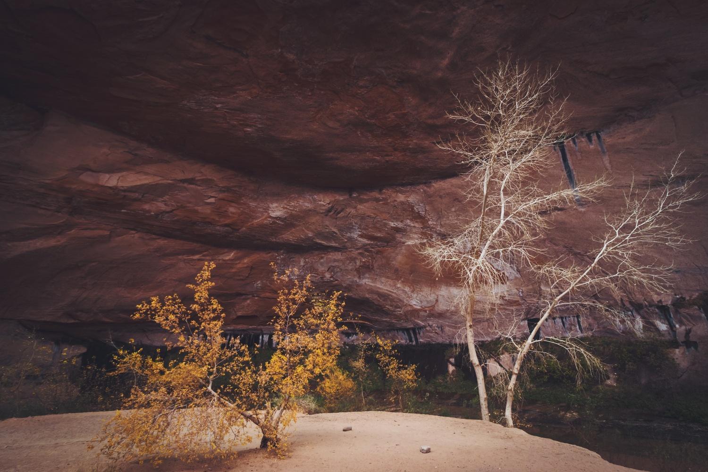 Coyote Gulch Trees, Utah by Lee Hanyo