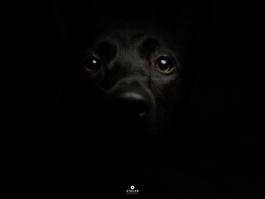 Guess the breed!  by Christian Vieler