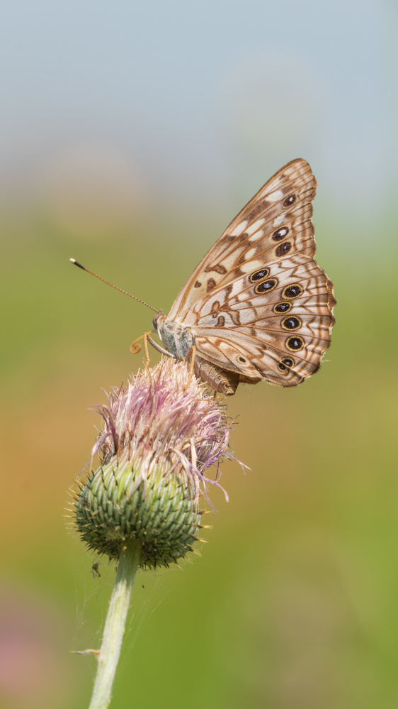 Butterfly on a Flower by Timothy Harris