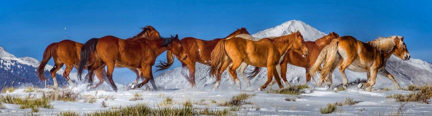 Galloping Horses by Michael Doane